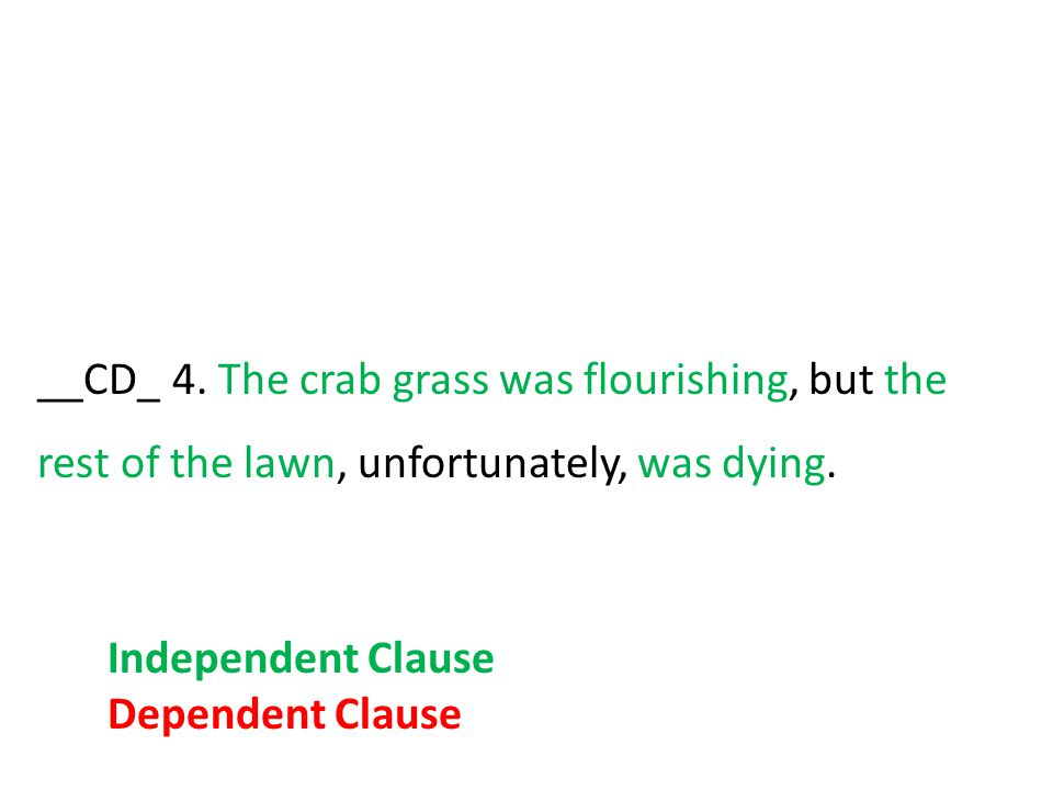 __CD_ 4. The crab grass was flourishing, but the rest of the lawn, unfortunately, was dying. Independent Clause Dependent Clause