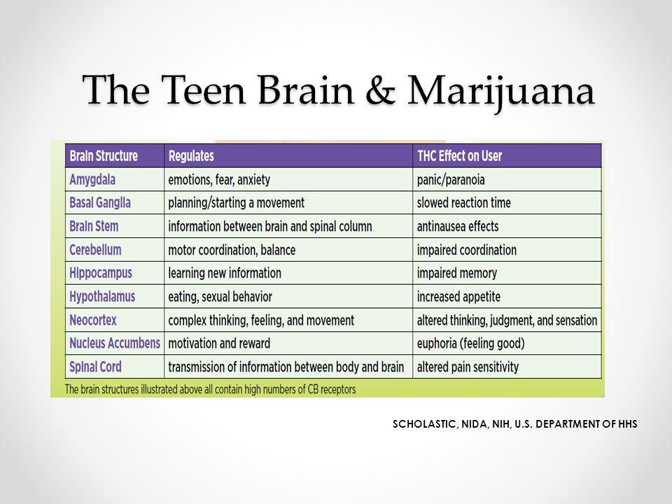 The Teen Brain & Marijuana SCHOLASTIC, NIDA, NIH, U.S. DEPARTMENT OF HHS
