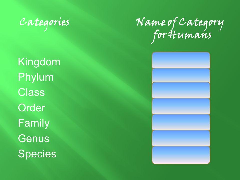 CategoriesName of Category for Humans KingdomAnimalia PhylumChordata ClassMammalia OrderPrimates FamilyHominidae GenusHomo SpeciesSapien