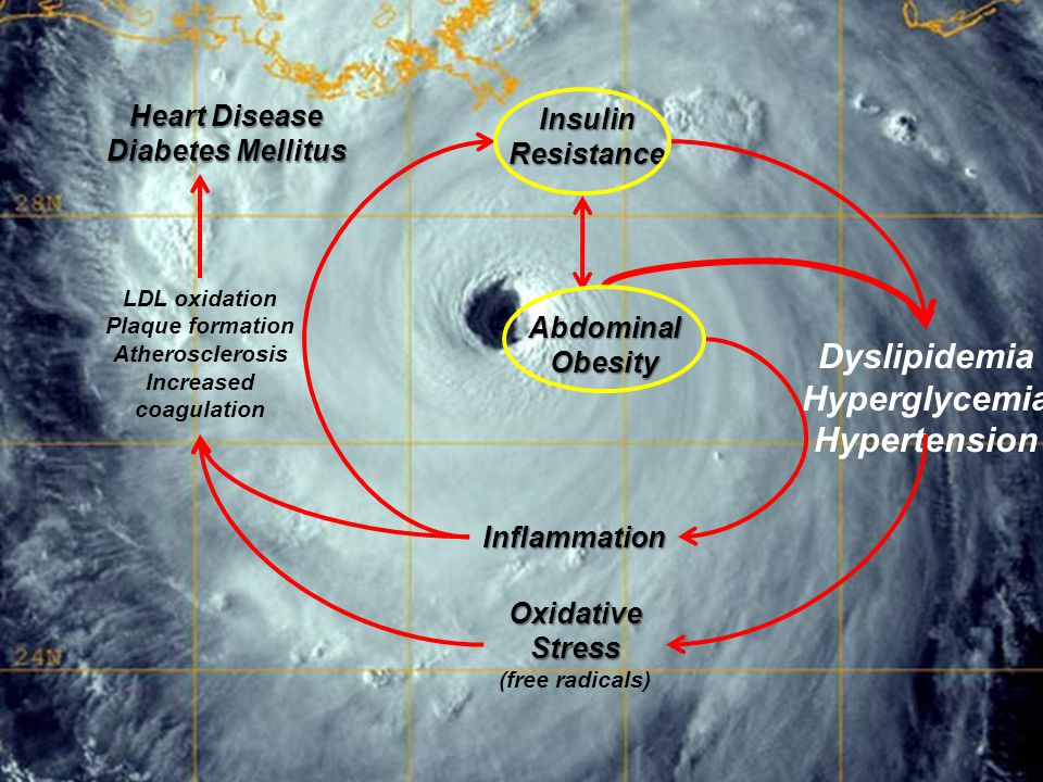 © 2010 47 Dyslipidemia Hyperglycemia Hypertension Insulin Resistance Abdominal Obesity Oxidative Stress (free radicals) Inflammation LDL oxidation Pla