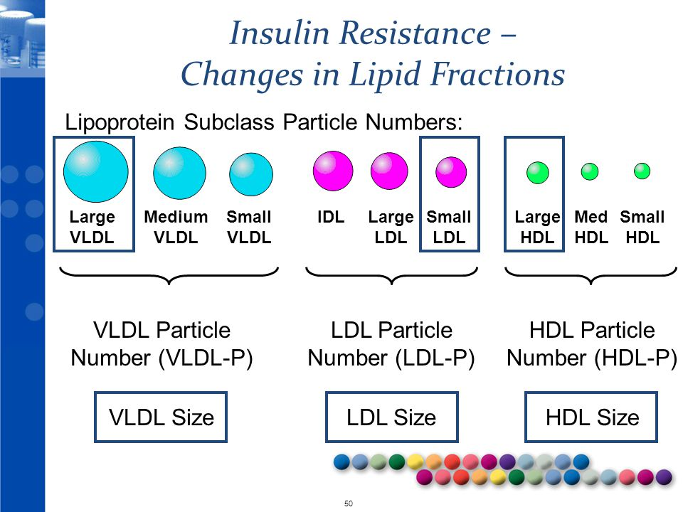 © 2010 50 LDL Particle Number (LDL-P) LDL Size VLDL Particle Number (VLDL-P) VLDL Size HDL Particle Number (HDL-P) HDL Size Insulin Resistance – Changes in Lipid Fractions Large VLDL Medium VLDL Small VLDL Large LDL Small LDL IDLLarge HDL Small HDL Med HDL Lipoprotein Subclass Particle Numbers: