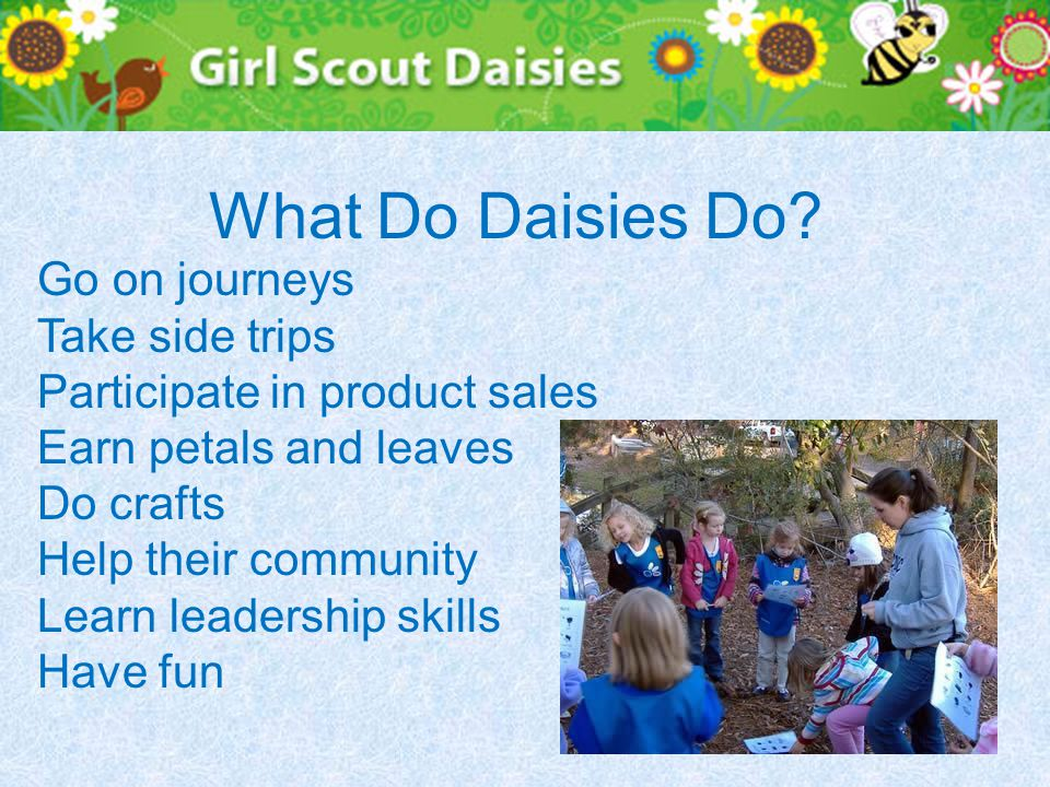 What Do Daisies Do.