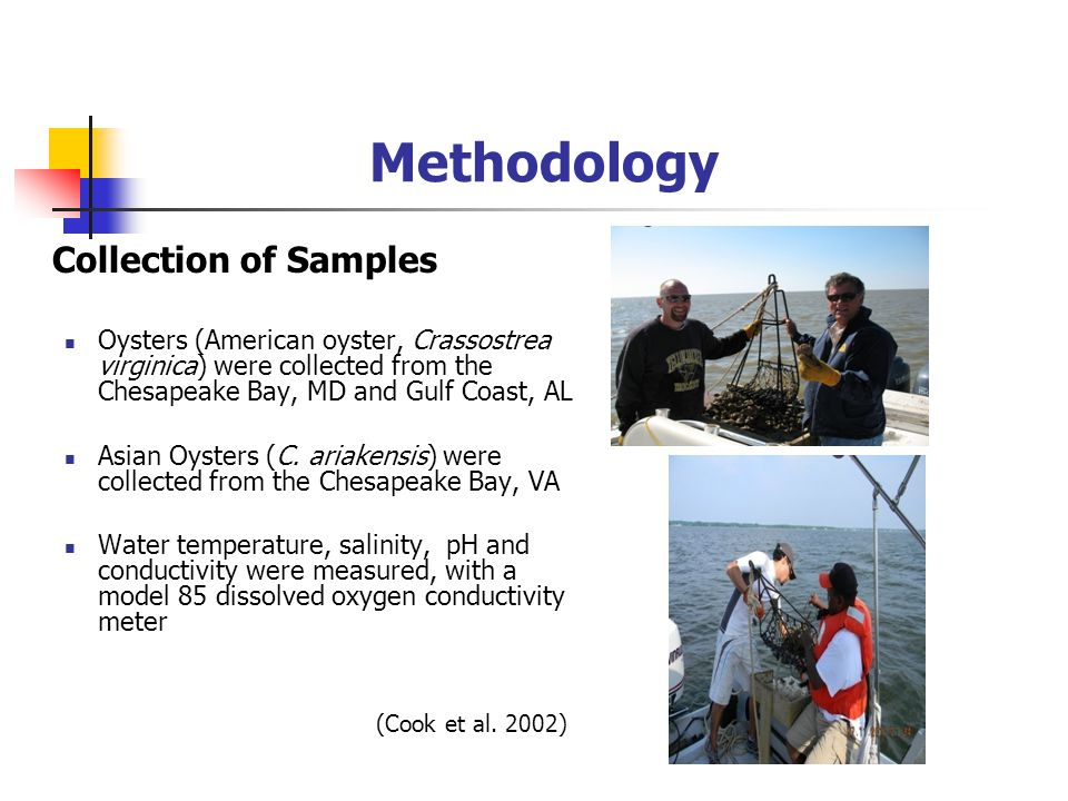 Methodology Collection of Samples Oysters (American oyster, Crassostrea virginica) were collected from the Chesapeake Bay, MD and Gulf Coast, AL Asian Oysters (C.