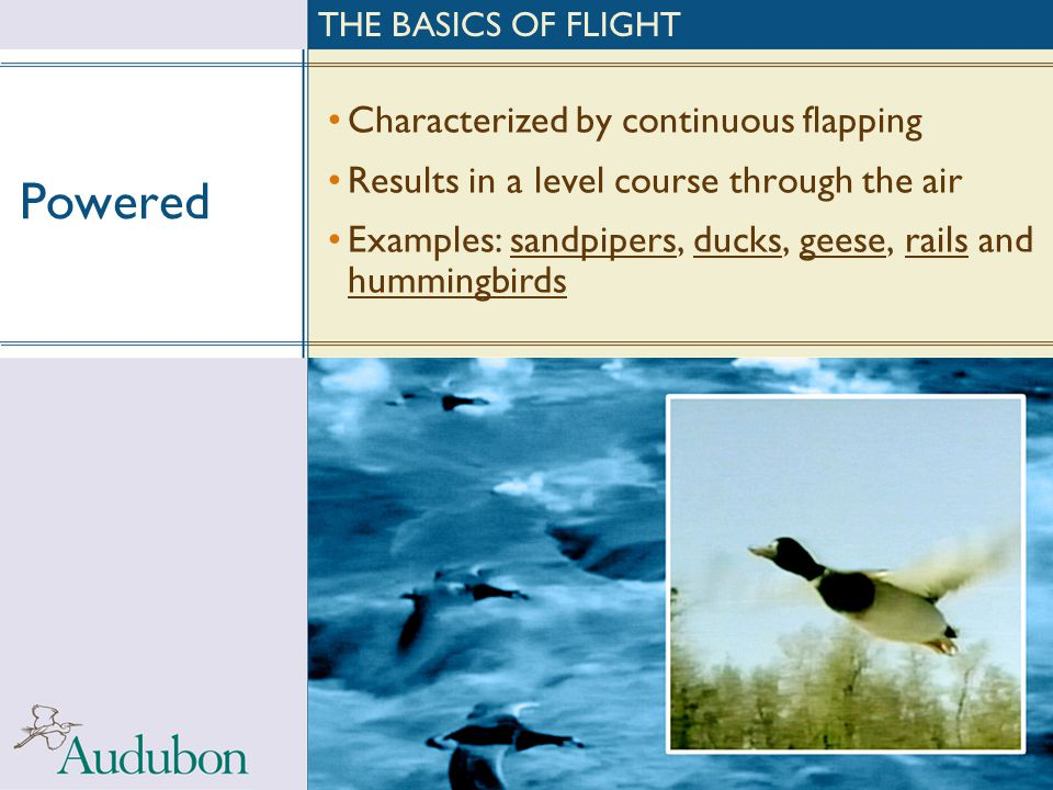 Powered Characterized by continuous flapping Results in a level course through the air Examples: sandpipers, ducks, geese, rails and hummingbirds THE