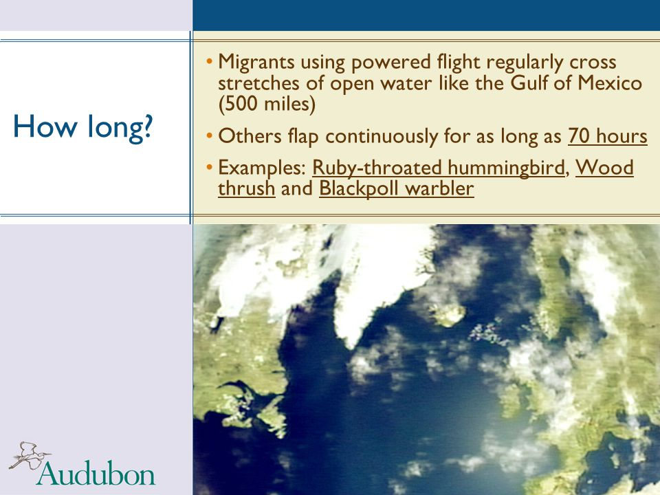 How long? Migrants using powered flight regularly cross stretches of open water like the Gulf of Mexico (500 miles) Others flap continuously for as lo