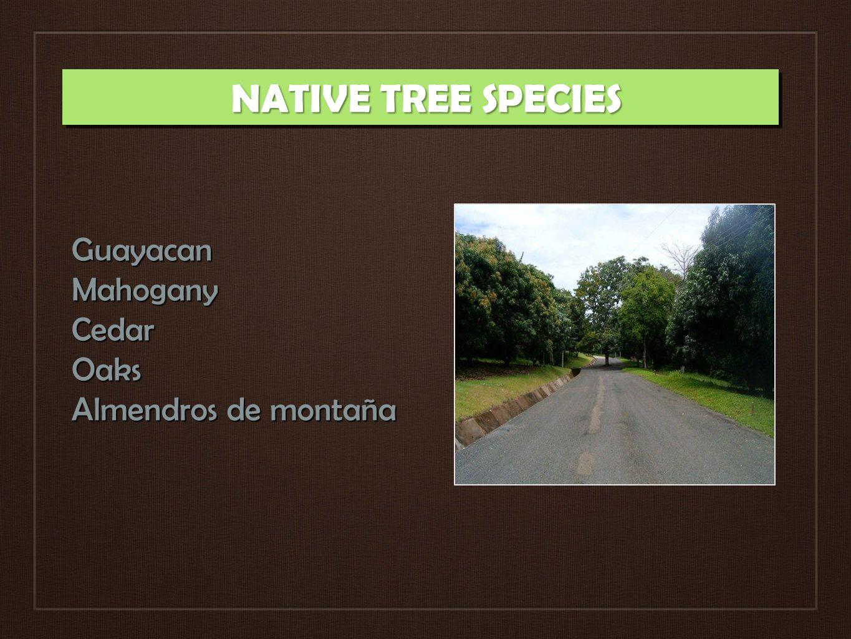 NATIVE TREE SPECIES GuayacanMahoganyCedarOaks Almendros de montaña