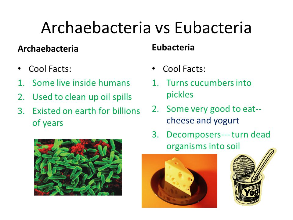 Archaebacteria vs Eubacteria Archaebacteria Cool Facts: 1.Some live inside humans 2.Used to clean up oil spills 3.Existed on earth for billions of yea