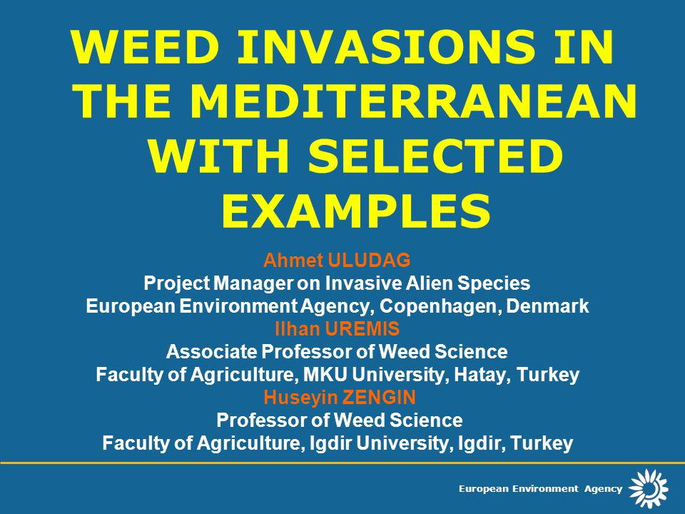 European Environment Agency Populations of the root parasite only exist in regions with mediterranean climate, although individuals are able to reach maturity under conditions of temperate climate, too, and although O.
