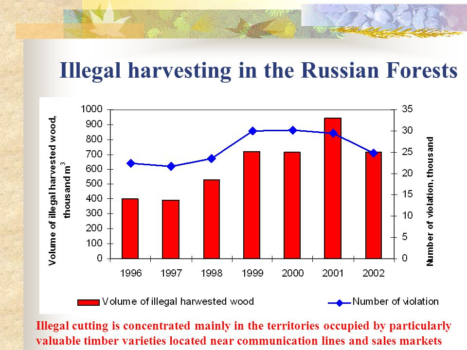 Illegal harvesting in the Russian Forests Illegal cutting is concentrated mainly in the territories occupied by particularly valuable timber varieties