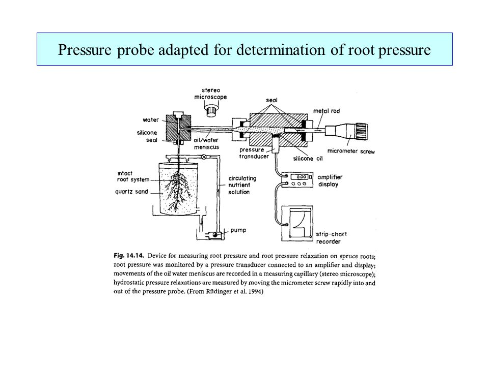 Pressure probe adapted for determination of root pressure