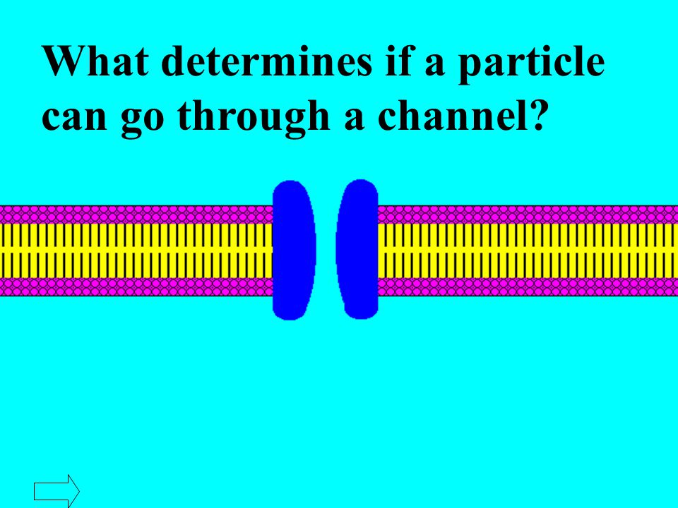Passive Transport Materials move down the concentration gradient and across a membrane.