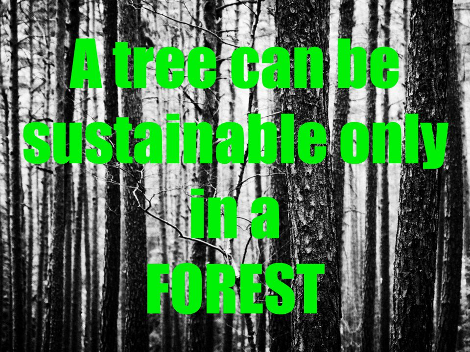 A tree can be sustainable only in a FOREST