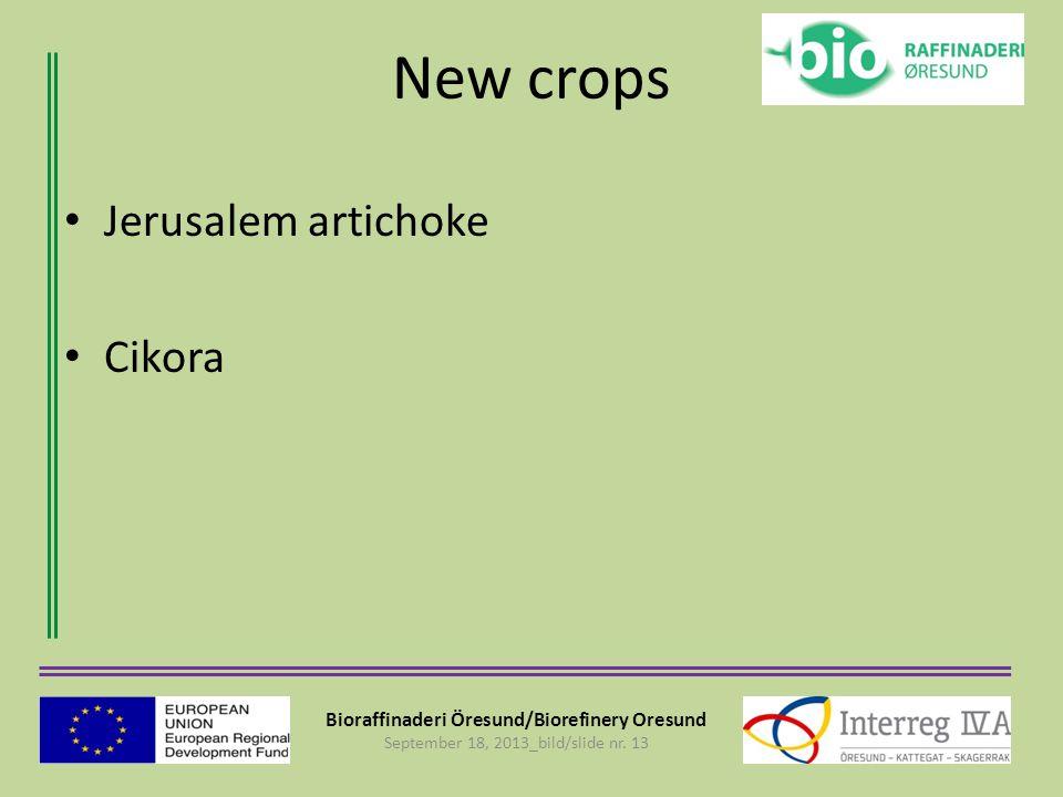 Bioraffinaderi Öresund/Biorefinery Oresund September 18, 2013_bild/slide nr. 13 New crops Jerusalem artichoke Cikora