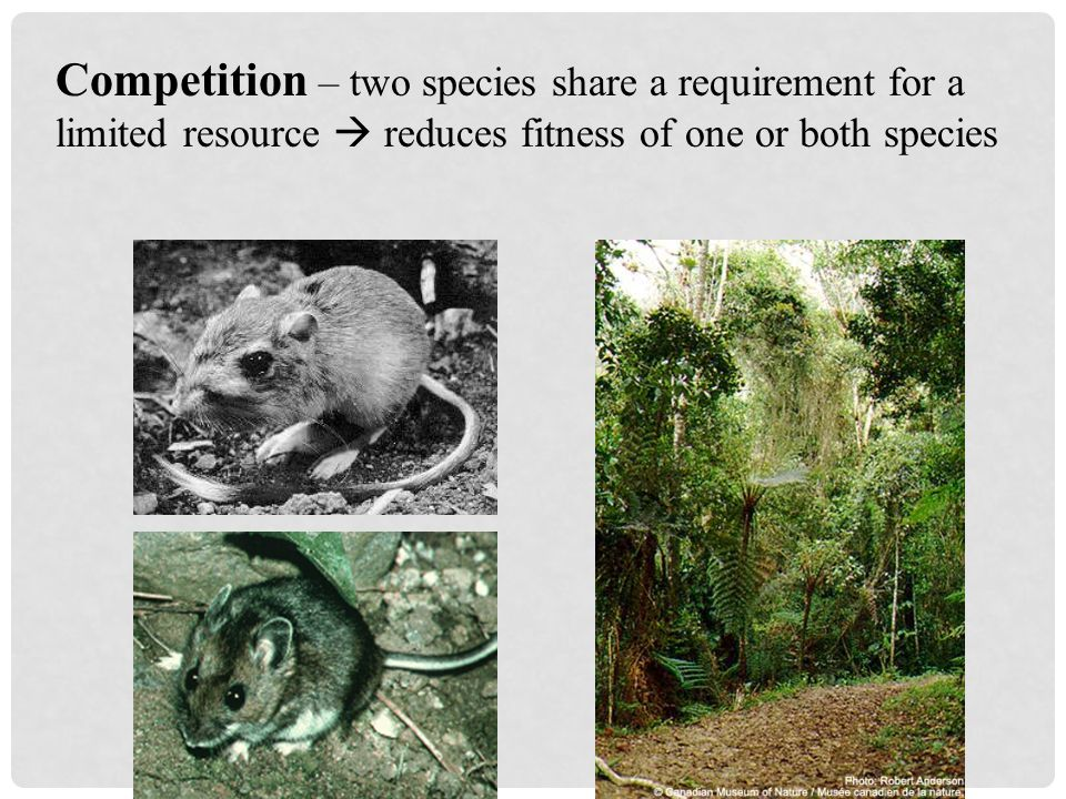 Predation – one species feeds on another  enhances fitness of predator but reduces fitness of prey herbivory is a form of predation