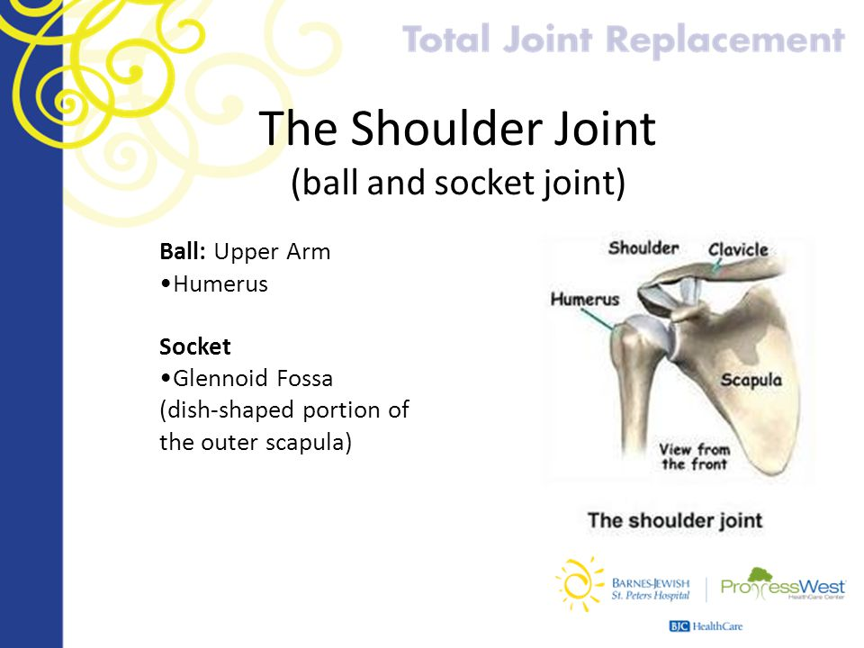 Ball And Socket Joint Shoulder The Shoulder Joint Ball And
