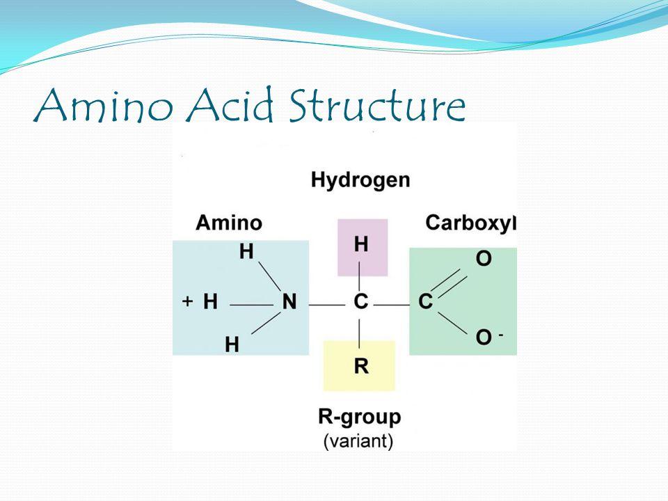 20 different amino acids