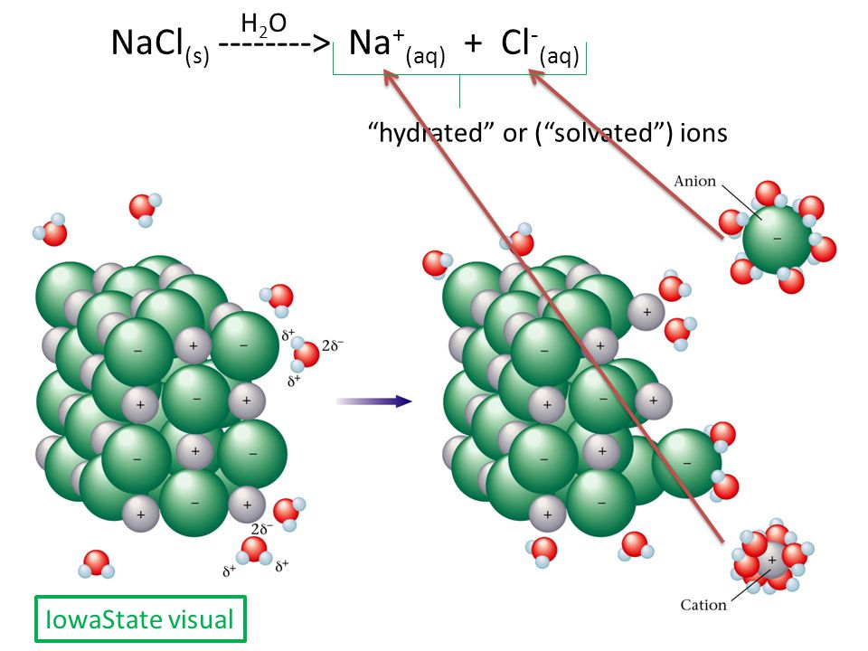 "NaCl (s) --------> Na + (aq) + Cl - (aq) ""hydrated"" or (""solvated"") ions H2OH2O IowaState visual"