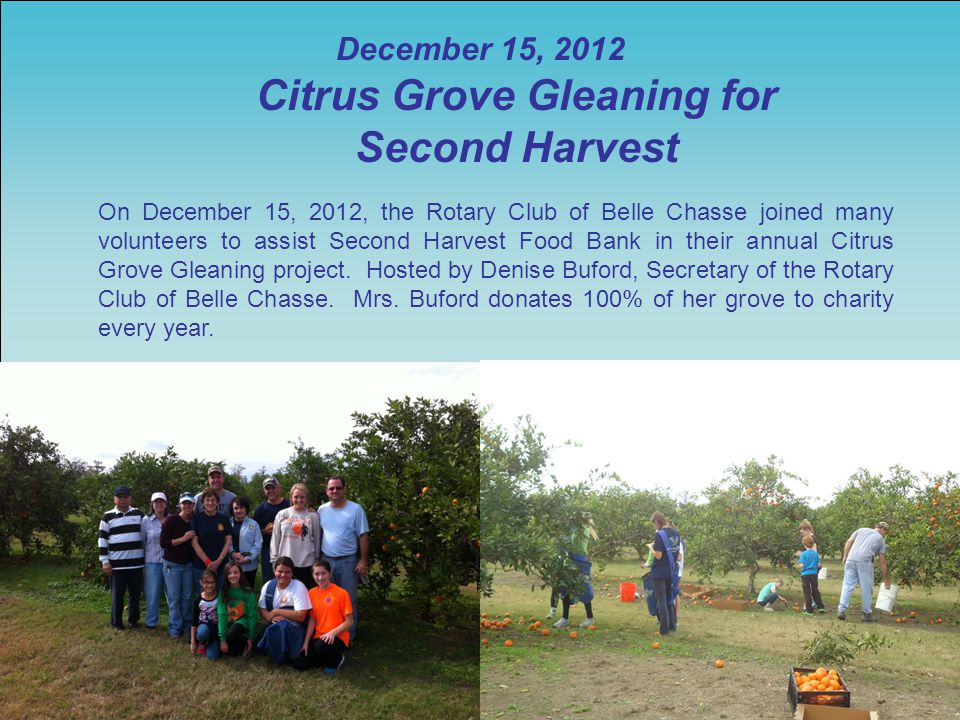 December 15, 2012 Citrus Grove Gleaning for Second Harvest On December 15, 2012, the Rotary Club of Belle Chasse joined many volunteers to assist Second Harvest Food Bank in their annual Citrus Grove Gleaning project.