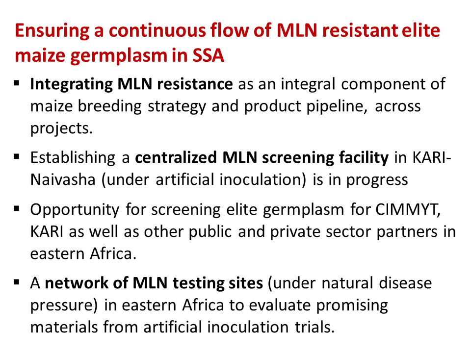 Ensuring a continuous flow of MLN resistant elite maize germplasm in SSA  Integrating MLN resistance as an integral component of maize breeding strat