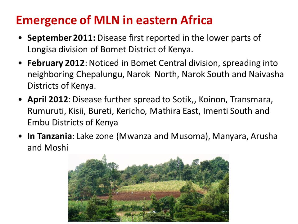 Emergence of MLN in eastern Africa September 2011: Disease first reported in the lower parts of Longisa division of Bomet District of Kenya. February