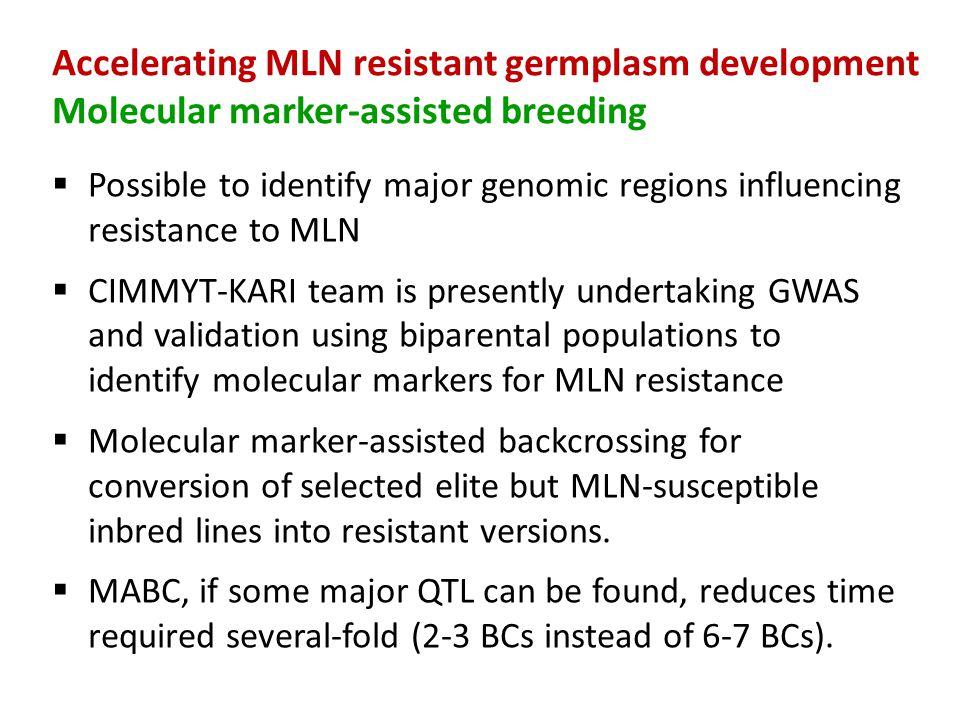 Accelerating MLN resistant germplasm development Molecular marker-assisted breeding  Possible to identify major genomic regions influencing resistanc