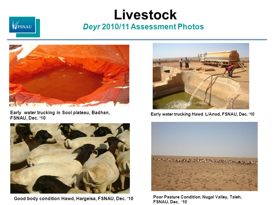 Deyr 2010/11 Assessment Photos Livestock Good body condition Hawd, Hargeisa, FSNAU, Dec.