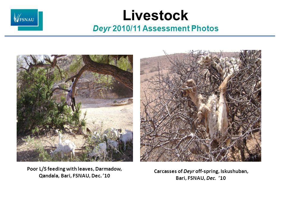 Poor L/S feeding with leaves, Darmadow, Qandala, Bari, FSNAU, Dec.