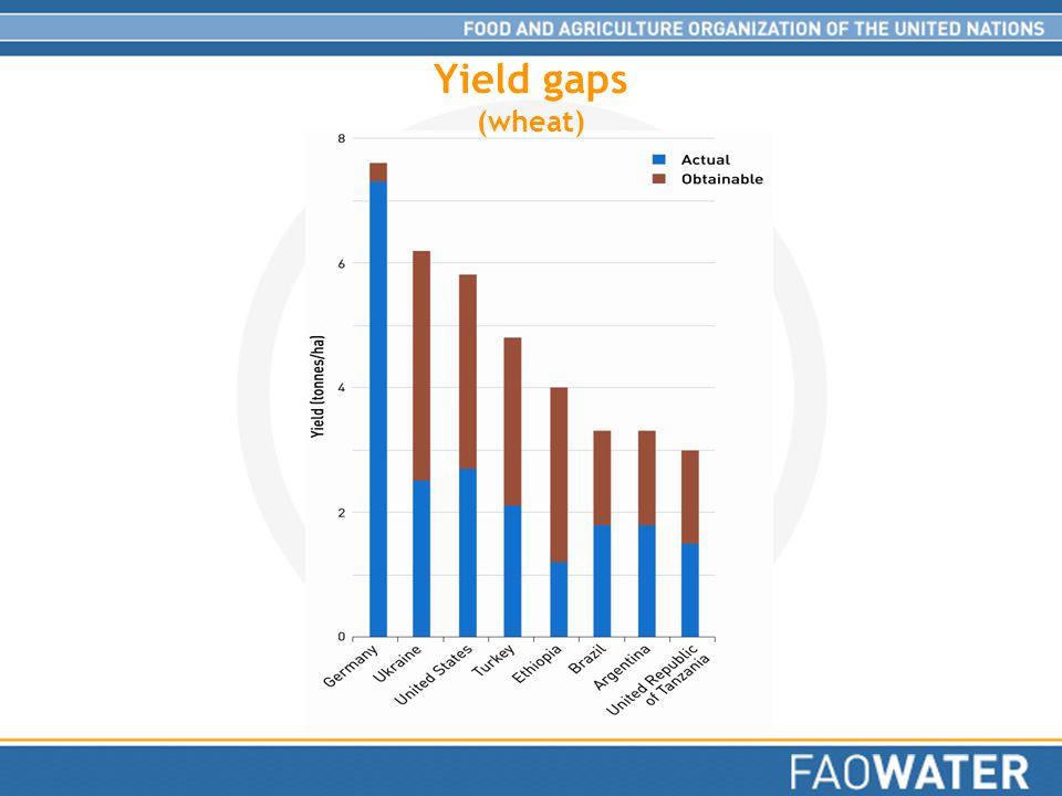 Yield gaps (wheat)