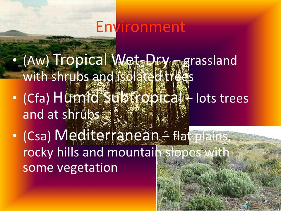 Environment (Aw) Tropical Wet-Dry – grassland with shrubs and isolated trees (Cfa) Humid Subtropical – lots trees and at shrubs (Csa) Mediterranean – flat plains, rocky hills and mountain slopes with some vegetation