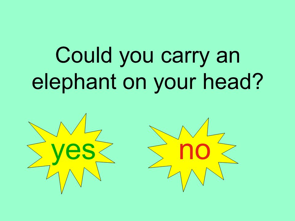 Could you carry an elephant on your head yes no
