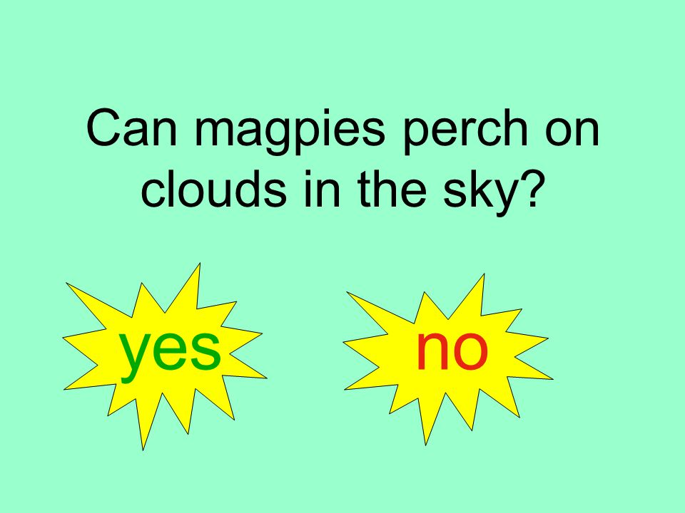 Can magpies perch on clouds in the sky yes no