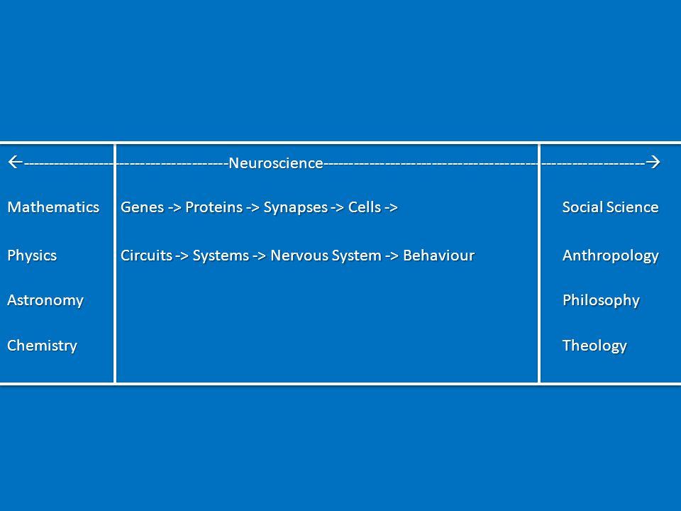 Genes to Behaviour Adult human brain has ≈ 100 billion neurons ≈ 100 billion glial cells ≈ 100 billion glial cells ≈ no.