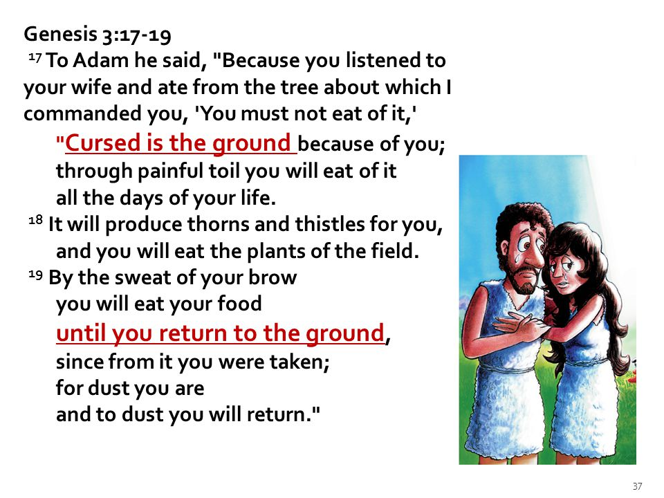 Genesis 3:17-19 17 To Adam he said, Because you listened to your wife and ate from the tree about which I commanded you, You must not eat of it, Cursed is the ground because of you; through painful toil you will eat of it all the days of your life.