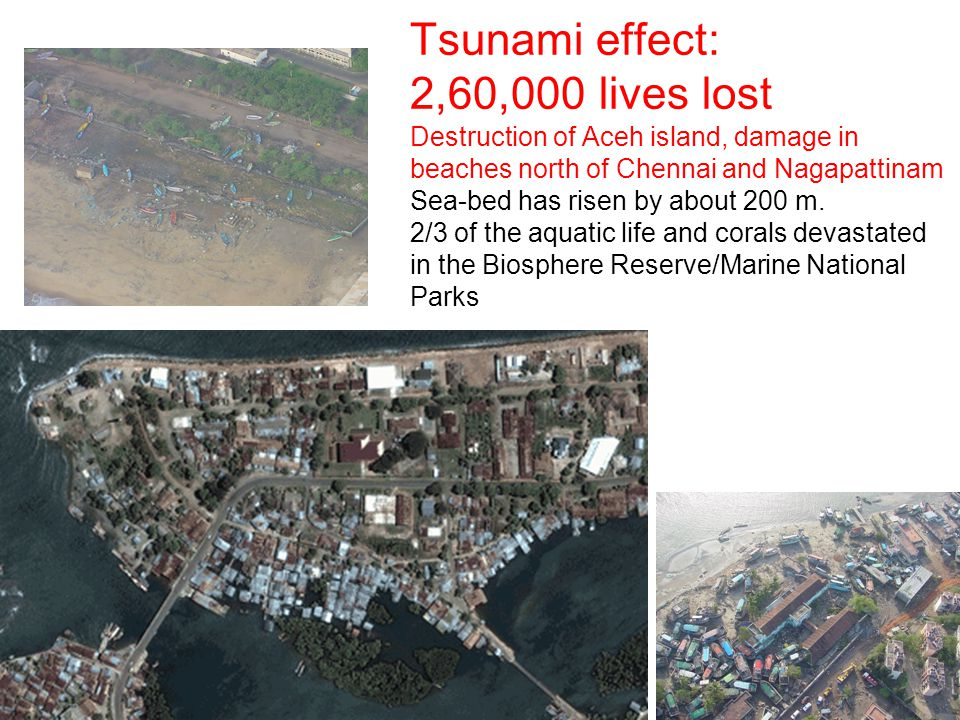 33 Tsunami effect: 2,60,000 lives lost Destruction of Aceh island, damage in beaches north of Chennai and Nagapattinam Sea-bed has risen by about 200 m.