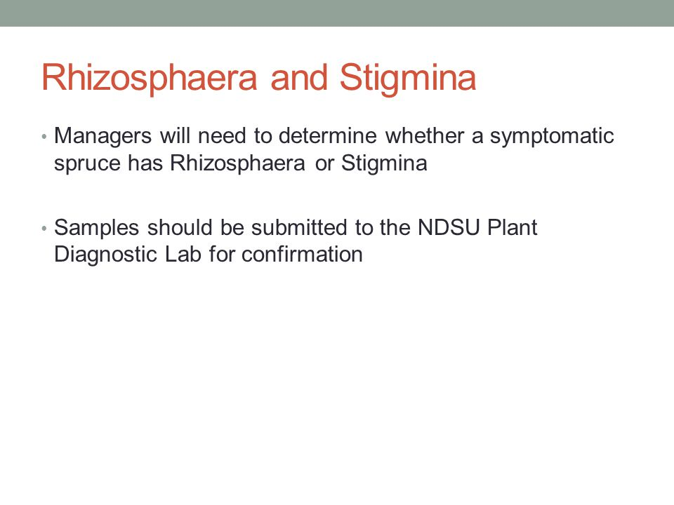 Rhizosphaera and Stigmina Managers will need to determine whether a symptomatic spruce has Rhizosphaera or Stigmina Samples should be submitted to the NDSU Plant Diagnostic Lab for confirmation