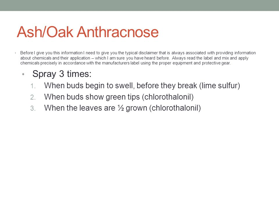 Ash/Oak Anthracnose Before I give you this information I need to give you the typical disclaimer that is always associated with providing information about chemicals and their application – which I am sure you have heard before.