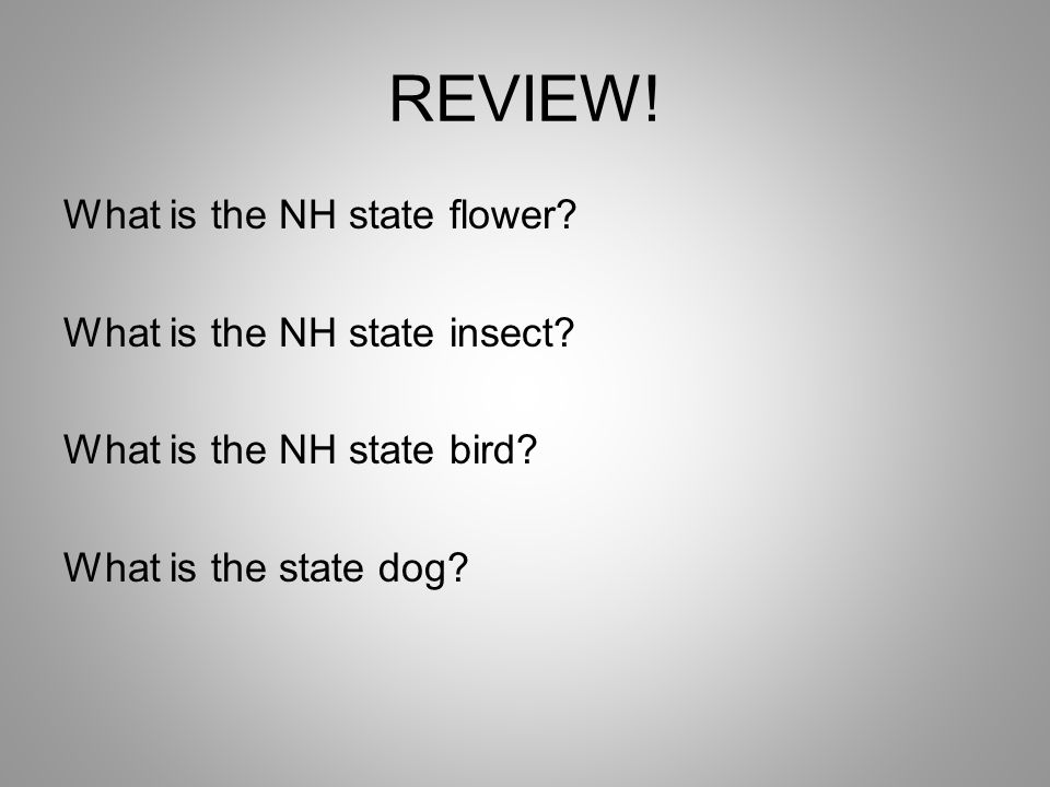 REVIEW. What is the NH state flower. What is the NH state insect.