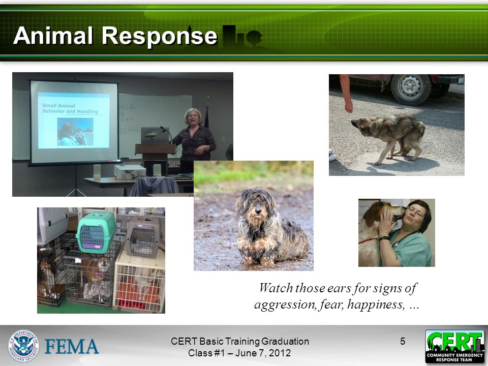 Animal Response 5CERT Basic Training Graduation Class #1 – June 7, 2012 Watch those ears for signs of aggression, fear, happiness, … next