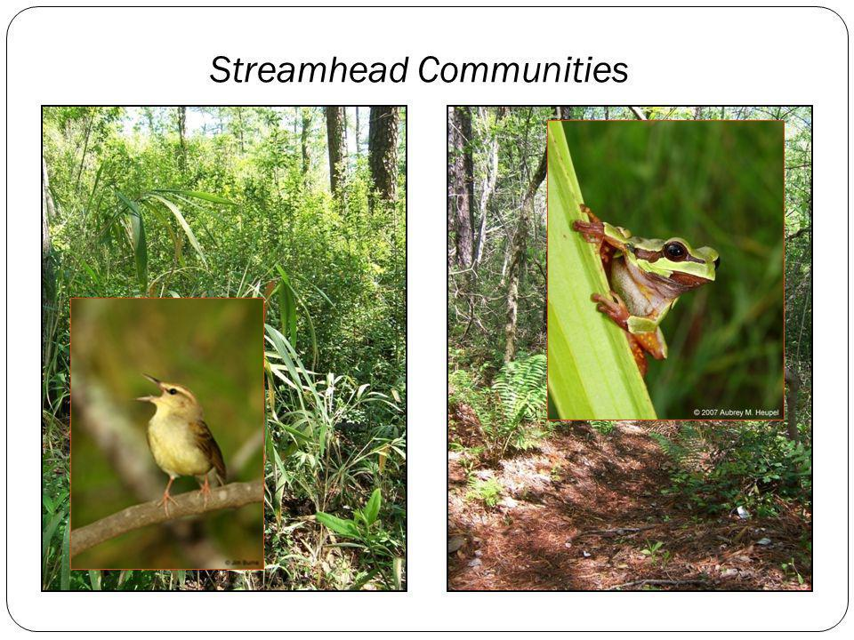 Streamhead Communities