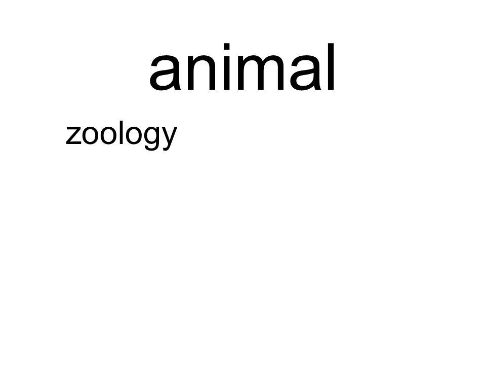 animal zoology