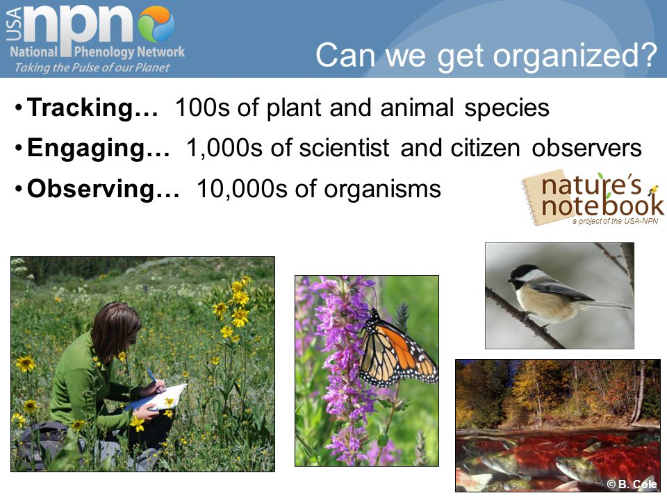 Tracking… 100s of plant and animal species Engaging… 1,000s of scientist and citizen observers Observing… 10,000s of organisms © B.