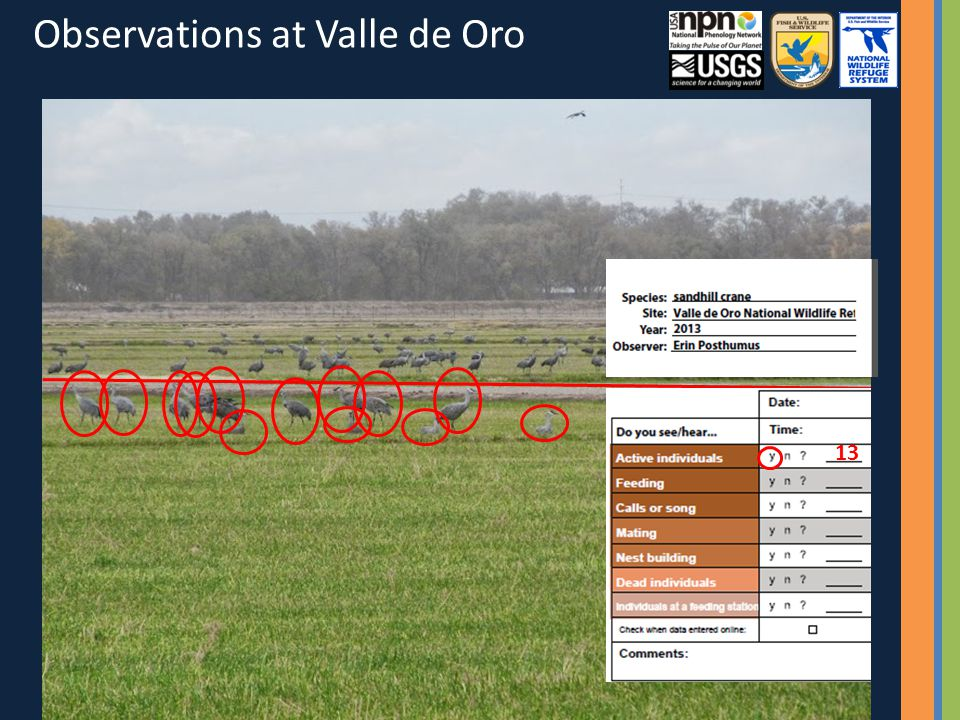 13 Observations at Valle de Oro