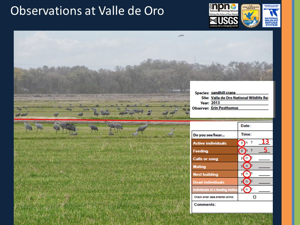 13 Observations at Valle de Oro 5