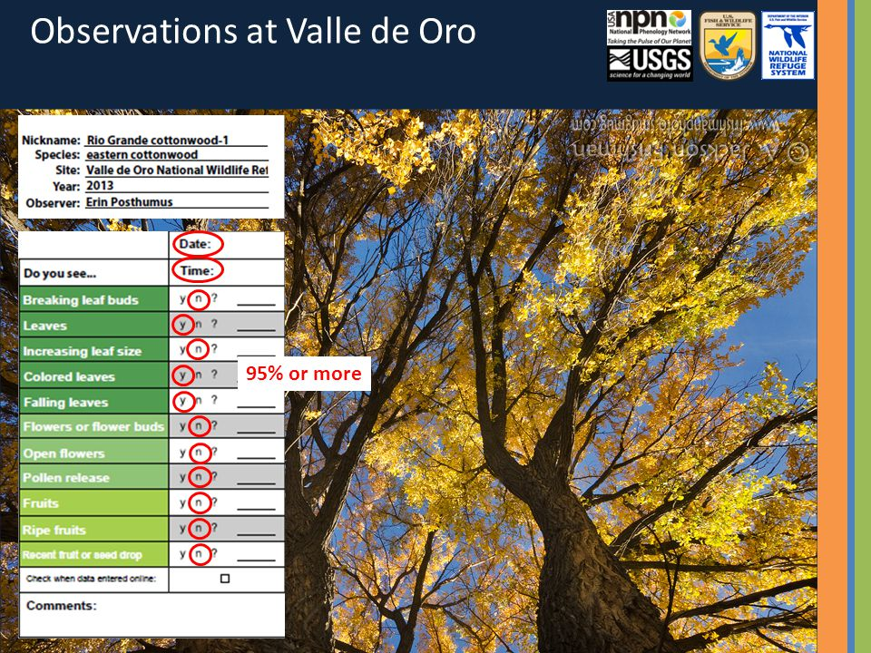 95% or more Observations at Valle de Oro