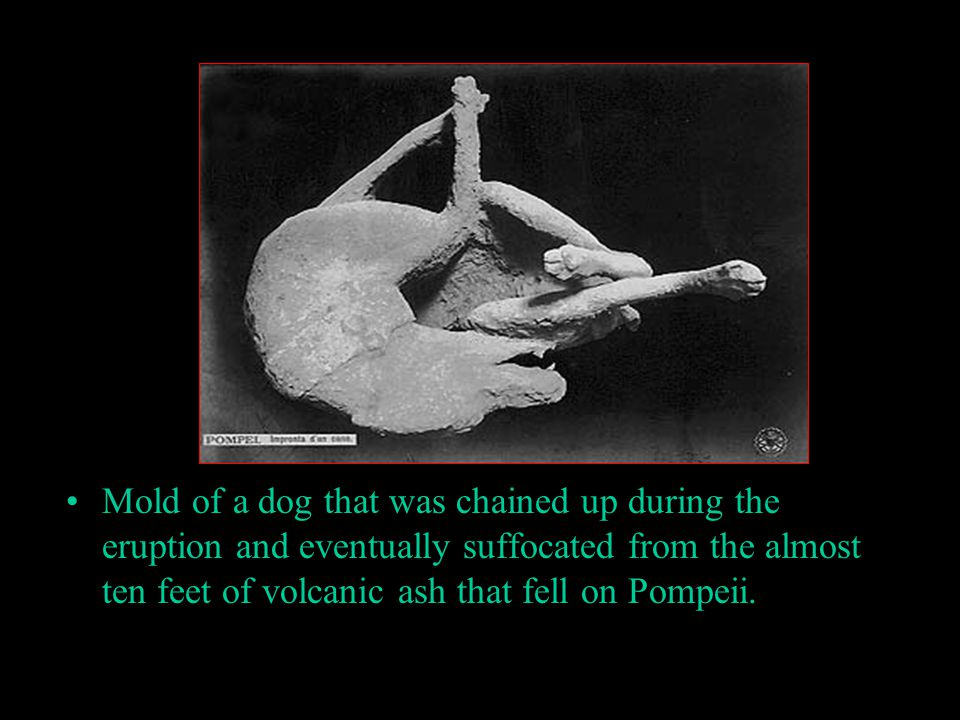 Mold of a dog that was chained up during the eruption and eventually suffocated from the almost ten feet of volcanic ash that fell on Pompeii.