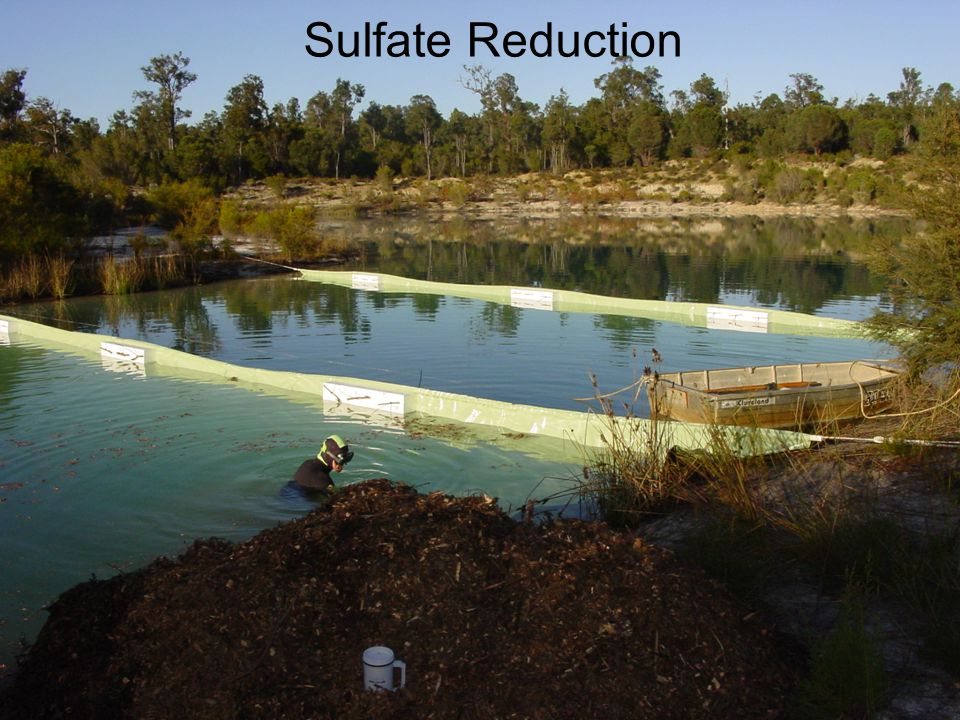 Centre of Excellence for Sustainable Mine Lakes P Mulch + P Mulch 20 µg L -1 Sulfate Reduction