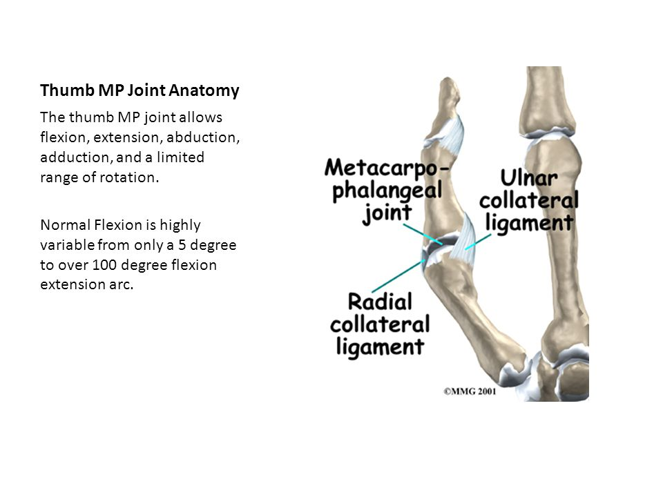 Thumb MP Joint Anatomy The thumb MP joint allows flexion, extension, abduction, adduction, and a limited range of rotation. Normal Flexion is highly v