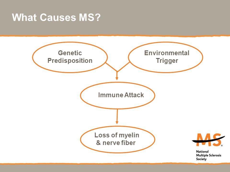 What Causes MS? Genetic Predisposition Environmental Trigger Immune Attack Loss of myelin & nerve fiber