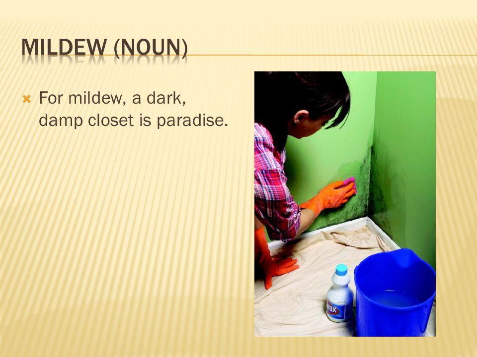  For mildew, a dark, damp closet is paradise.