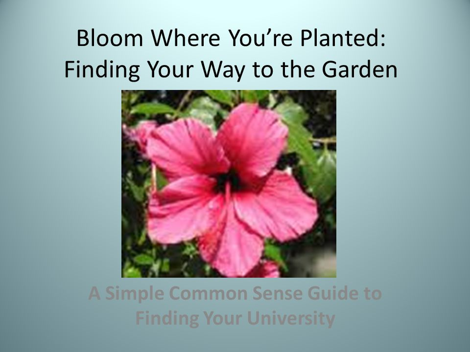 Bloom Where You're Planted: Finding Your Way to the Garden A Simple Common Sense Guide to Finding Your University